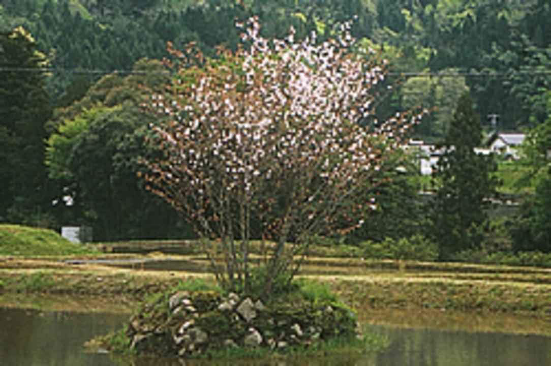 http://www.susa-jinja.jp/_assets/page_images/images/000/001/950/5dfbfa578119e6f5c2a8b9f51e9e302768a0ab8d.jpg?1437993941